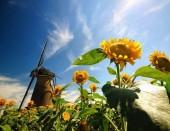 R-M6.1  X221 Diamond Painting Set Windmill Sunflowers 40x30cm